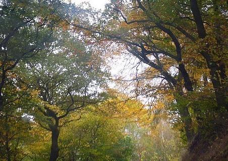 FOTKA - podzim27