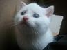 naše nový koťátko