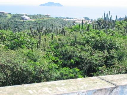 FOTKA - kaktusy