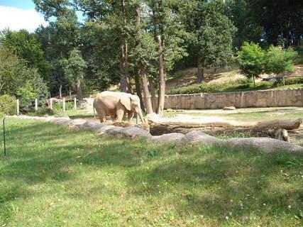 FOTKA - sloník