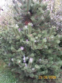 FOTKA - vánoční stromeček zdobený bublinkami