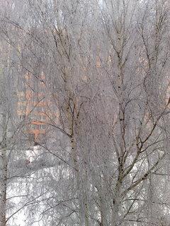 FOTKA - Stromy v zimě