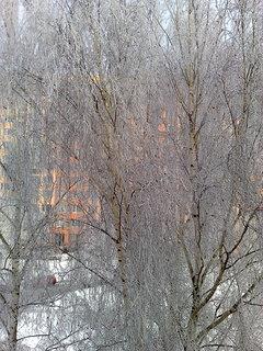 FOTKA - Stromy v zimě.