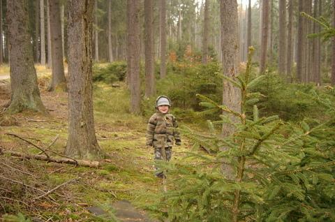 FOTKA - Lení v lese před rašeliništěm