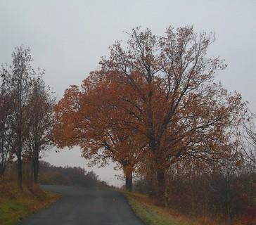 FOTKA - poslední foto podzimu1