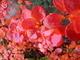 Barvičky podzimu-na zahradě