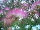 Květy stromu