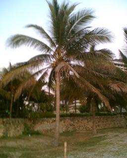 FOTKA - Palma