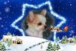Přejeme vám krásné Vánoce!!!