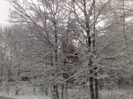 FOTKA - Stromy v zimě..