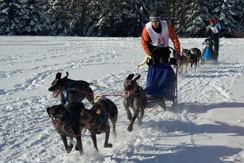 FOTKA - Závody psích spřežení