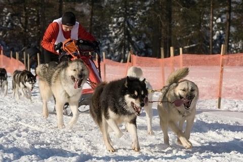 FOTKA - Závody psích spřežení ....