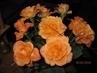 Kytice růží ještě jednou