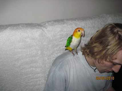 FOTKA - Vnuk s papouškem