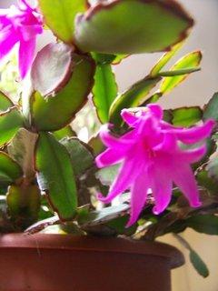 FOTKA - *..květ detail