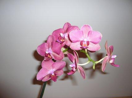 FOTKA - orchidejka.