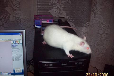 FOTKA - potkánek