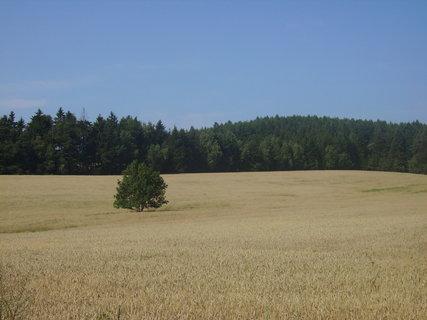 FOTKA - Pole