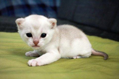 FOTKA - Kočky, kotata