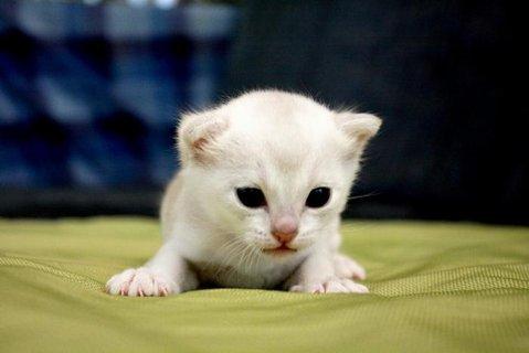 FOTKA - Kočky, kotata..