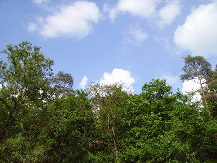 FOTKA - Stromy s mraky