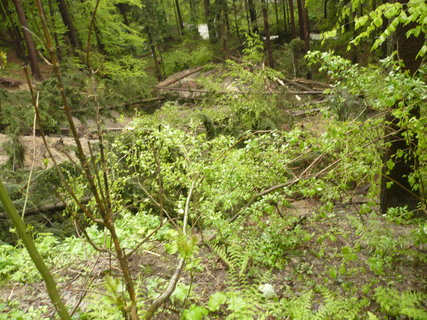 FOTKA - polámané stromy pod Girovou