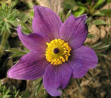 FOTKA - květinka.