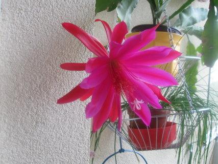 FOTKA - kaktus 03