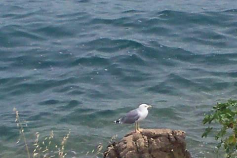 FOTKA - Racek u moře