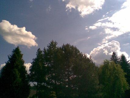 FOTKA - Nebe a stromy
