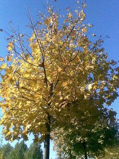 FOTKA - Podzim 1
