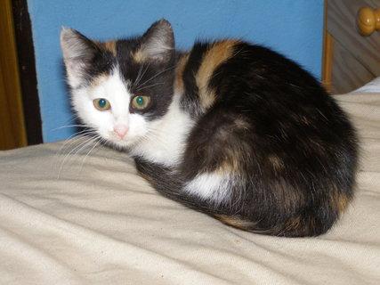 FOTKA - koťátko