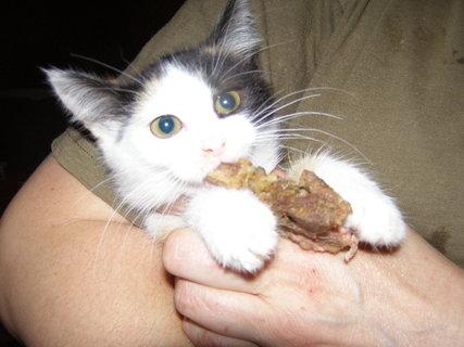 FOTKA - zlodějka-ukradla kostičku!