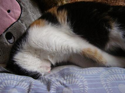 FOTKA - kočičí miminko