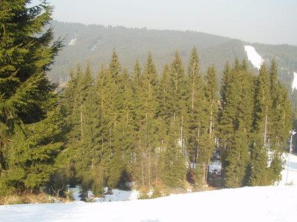 FOTKA - Smrkový lesík