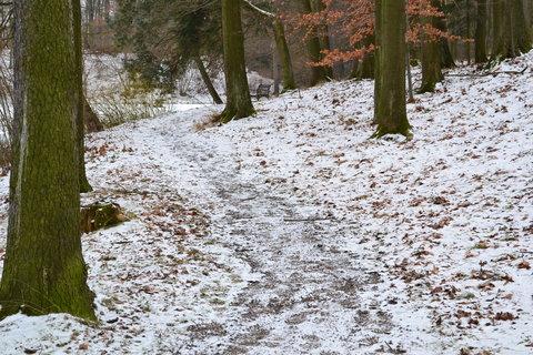 FOTKA - Lesní cestička