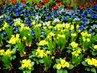 Jarní kvítí-směska