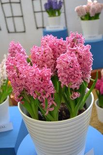 FOTKA - Jarní Flora