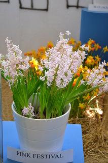 FOTKA - Jarní Flora....