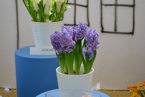 FOTKA - Jarní Flora.......