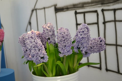 FOTKA - Jarní Flora.........