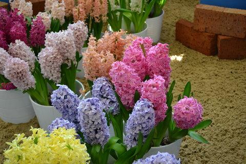 FOTKA - Jarní Flora..............