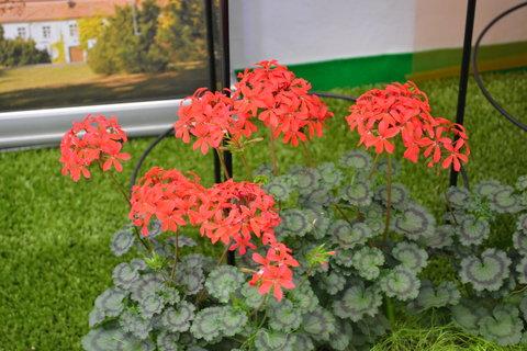 FOTKA - Jarní Flora 4,,,,,