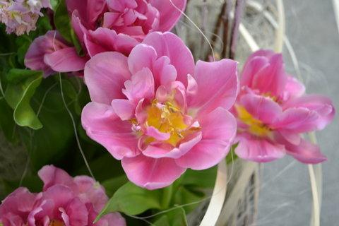 FOTKA - Jarní Flora 4,,,,,,