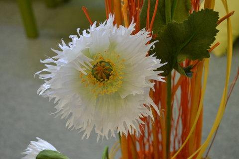 FOTKA - Jarní Flora 4,,,,,,,