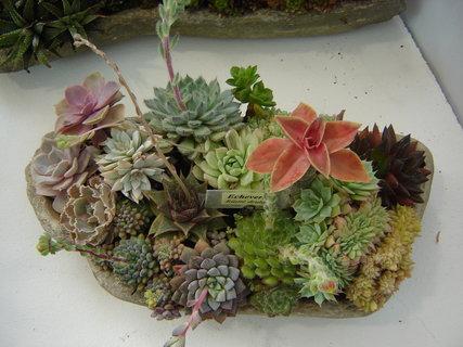 FOTKA - Výstava,,flora,