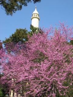 FOTKA - Minaret1