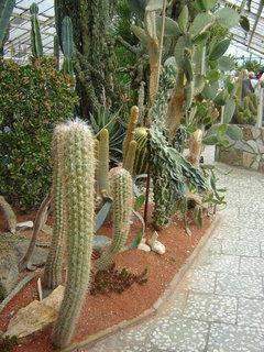 FOTKA - Skleník s kaktusy;;;;;