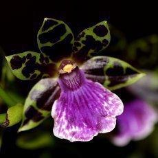Marie Rottrová zahájila výstavu orchidejí v Botanické zahradě v Troji