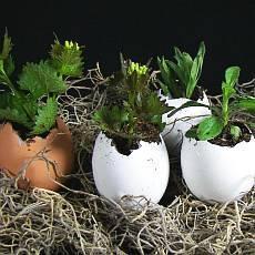Čas na posílení imunity je tu! Které bylinky jsou nejlepší?